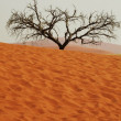 Tree in desert — Stock Photo #6569459