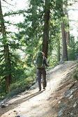 Túru v lese — Stock fotografie