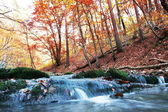 Autumn in forest — Stock Photo