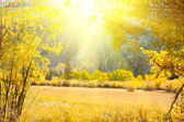 Prairie automne — Photo