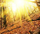 Autumn season in forest — Stock Photo