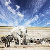 Elefant — Stockfoto