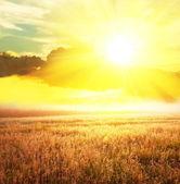 Field on sunset — Stock Photo