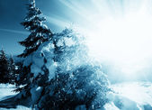 Frozen trees in sunny — Stock Photo