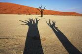 In desert Namib — Stock Photo