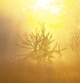 Morning fog in forest — Stock Photo