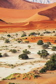 Namib — Photo