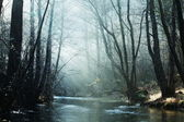 River in morning — Stock Photo