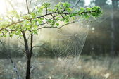 Spider-web — Stock Photo