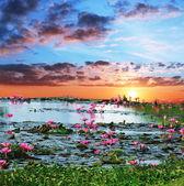 Water flora — Stock Photo
