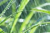 Wet grass — Stock Photo