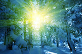 Winters tafereel in bos — Stockfoto