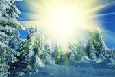 Temporada de invierno en el bosque — Foto de Stock