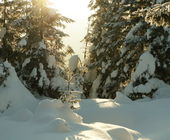 Winters forest on sunrise — Stock Photo