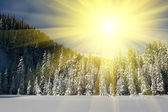 Winters in forest — Stock Photo