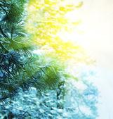A frozen tree — Stock Photo