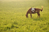 Horse on the field — Stock Photo