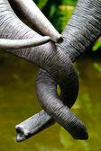 Tangled Trunks — Stock Photo