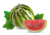 Watermelon with slices — Stock Vector