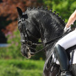 Dressage horse — Stock Photo