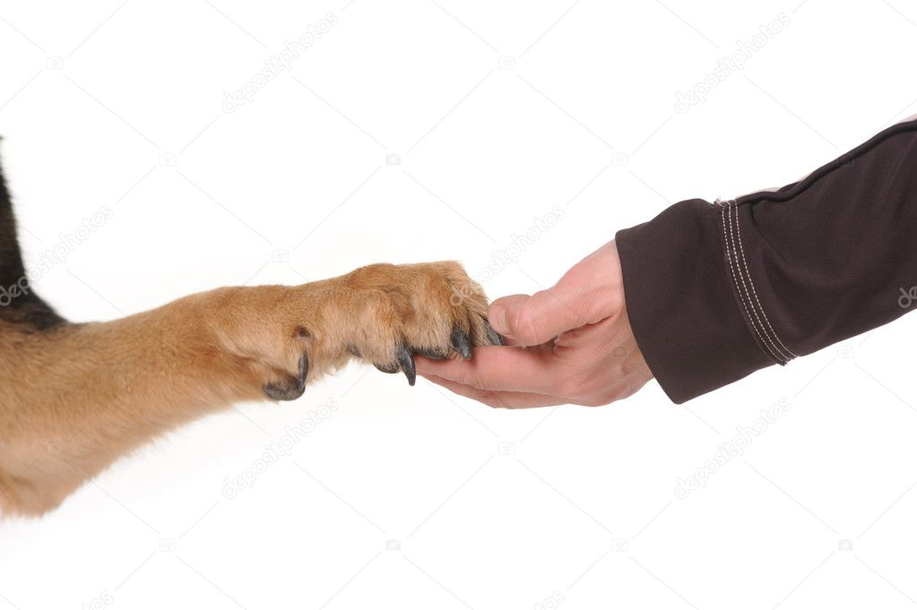 Dog paw and human hand shaking, — Stock Photo #5494605