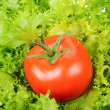 Green salad and tomato isolated on white background — Stock Photo #5847193
