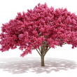 3d tree render on white background — Stock Photo