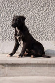Stray Dog — Stockfoto