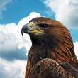 Golden Eagle - Foto Stock