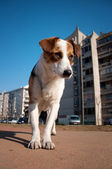 Dog on the street — Stock fotografie