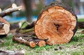 A staple of biomass, arranged firewood. — Stock Photo