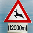Deer on the road - Stock Photo