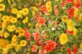 Orange anf yellow flowers — Stock Photo