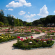 Rose garden in Madrid, Spain - Stock Photo