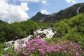 Arroyo en las montañas — Stok fotoğraf