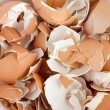 Eggshell cracks - 