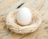 Big egg in small nest — Stock Photo