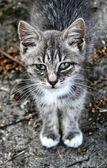 грустно полосатый котенок — Стоковое фото