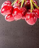 Cluster of wet sweet berries — Stock Photo