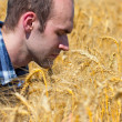Farmer in wheat field — Foto Stock