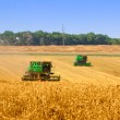 Combines working on a wheat field - 图库照片