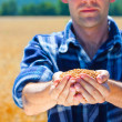 Happy farmer holding ripe wheat corns - Stock Photo