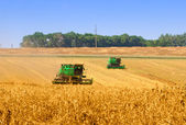 Combines working on a wheat field — Foto de Stock