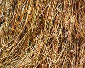 Paja seca — Foto de Stock