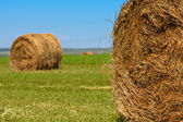 Big bales of straw — Stock Photo