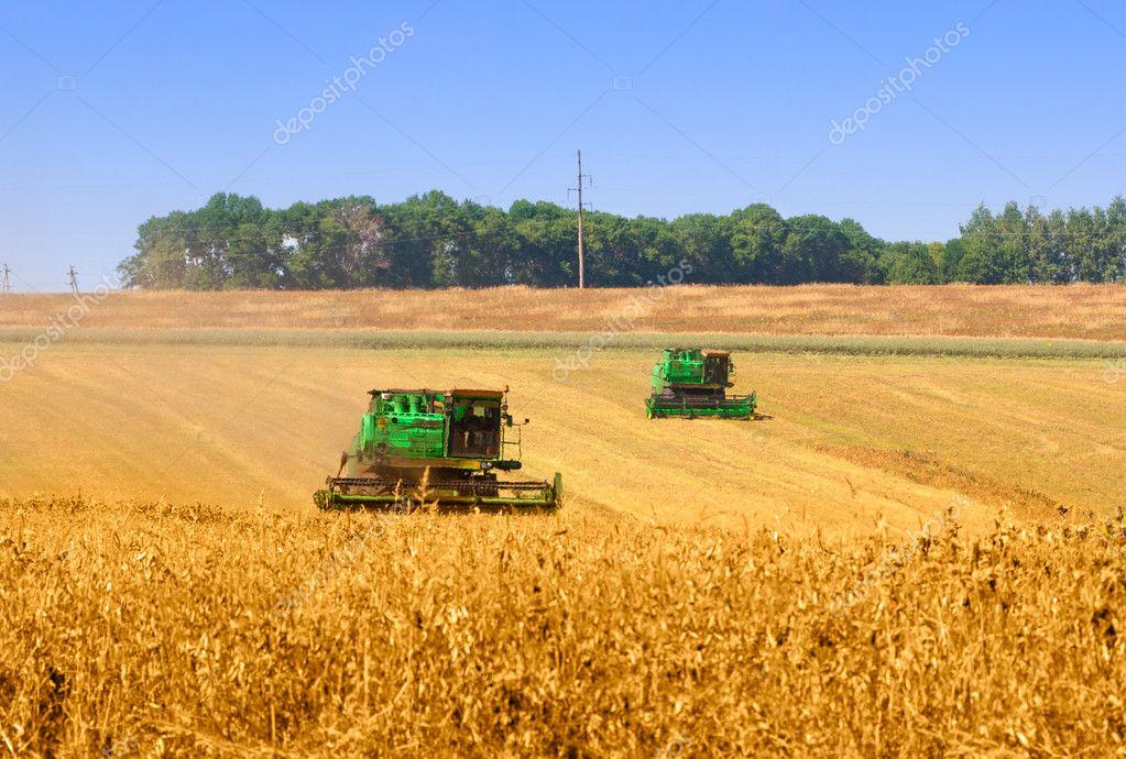 комбайн пшеничное поле фото
