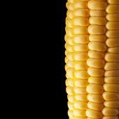 Ripe corn on the cob — Stock Photo