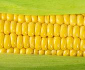 Espiga de milho madura — Foto Stock