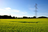 Electricity pylon in barley field — Stock Photo