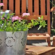Verbena pot on terrace — Stock Photo